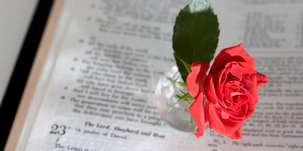 Salmos Para O Amor: Salmo 111: O Salmo Do Amor Verdadeiro E Das Promessas De